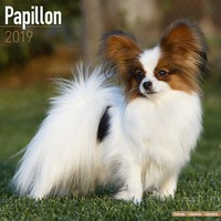 Papillon Wall Calendar 2019 by Avonside