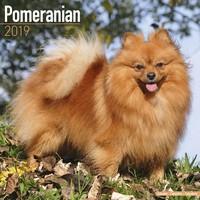 Pomeranian Wall Calendar 2019 by Avonside