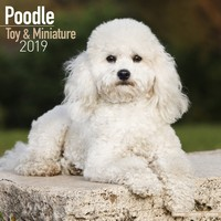 Poodle (Toy & Miniature) Wall Calendar 2019 by Avonside