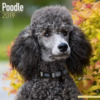 Poodle Wall Calendar 2019 by Avonside