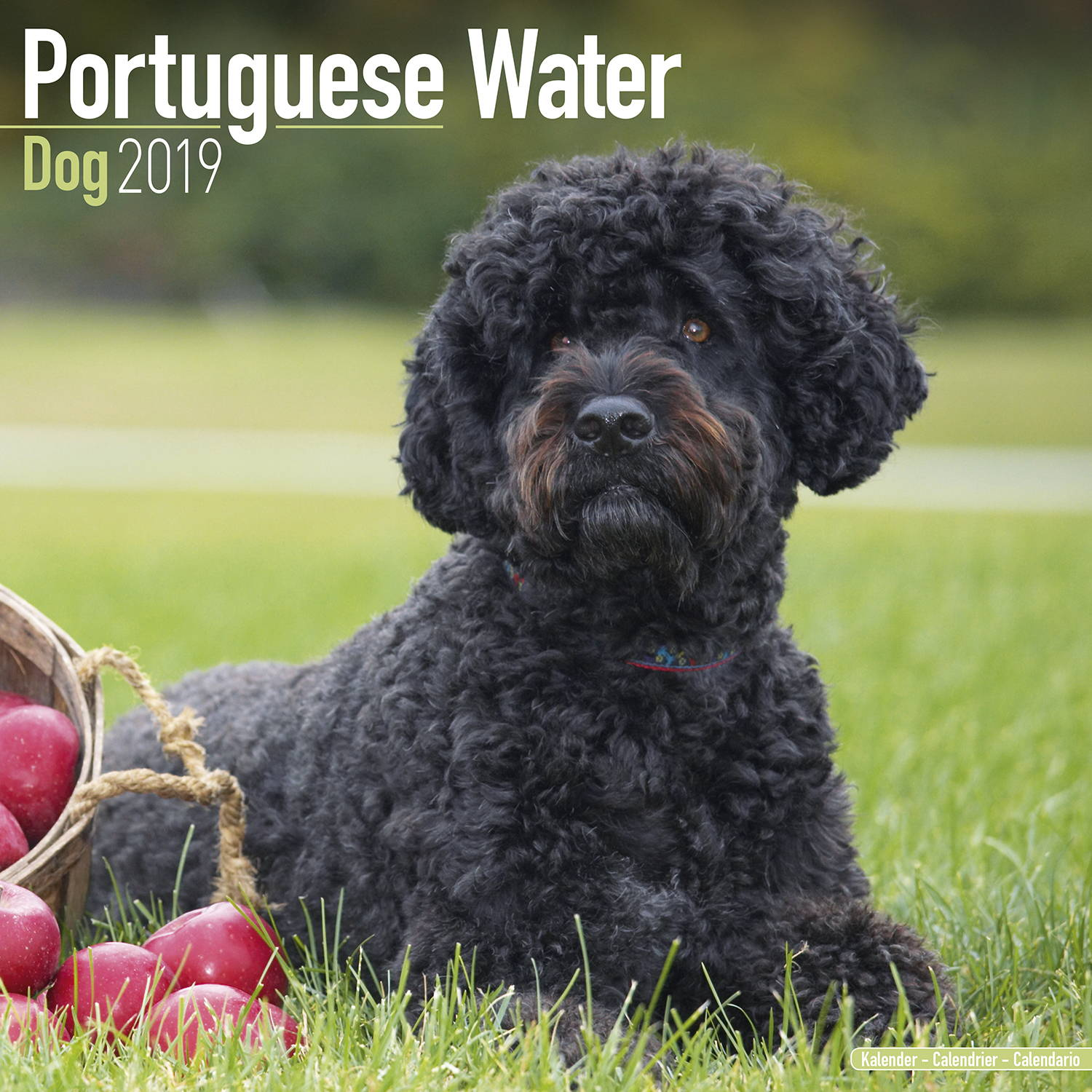 Portuguese Waterdog Calendar Dog Breed Megacalendars