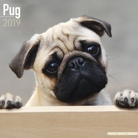 Pug Wall Calendar 2019 by Avonside