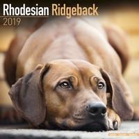 Rhodesian Ridgeback Wall Calendar 2019 by Avonside