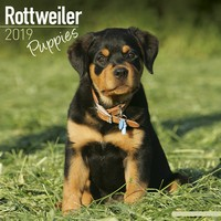 Rottweiler Puppies Wall Calendar 2019 by Avonside