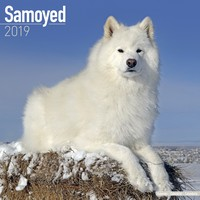 Samoyed Wall Calendar 2019 by Avonside