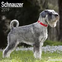 Schnauzer (Euro) Wall Calendar 2019 by Avonside