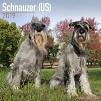 Schnauzer (Us) Wall Calendar 2019 by Avonside