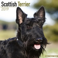 Scottish Terrier Wall Calendar 2019 by Avonside
