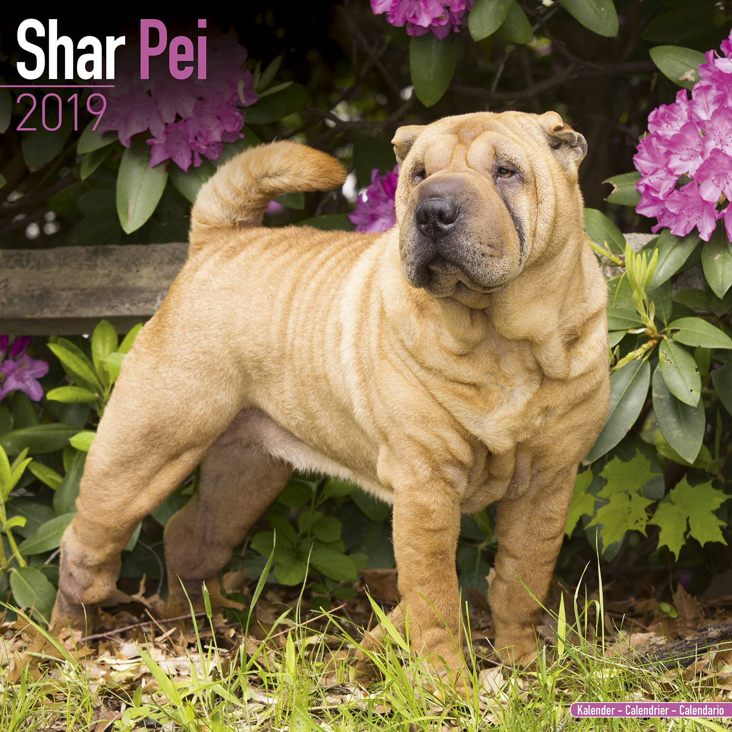 shar pei calendar dog breed calendars megacalendars. Black Bedroom Furniture Sets. Home Design Ideas