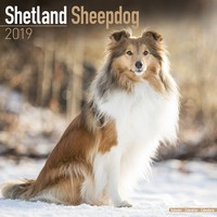 Shetland Sheepdog Wall Calendar 2019 by Avonside