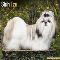 Shih Tzu Wall Calendar 2019 by Avonside