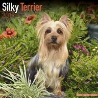 Silky Terrier Wall Calendar 2019 by Avonside