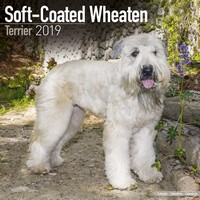 Softcoat Wheaten Terrier Wall Calendar 2019 by Avonside