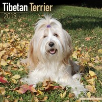 Tibetan Terrier Wall Calendar 2019 by Avonside