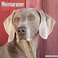Weimaraner Wall Calendar 2019 by Avonside