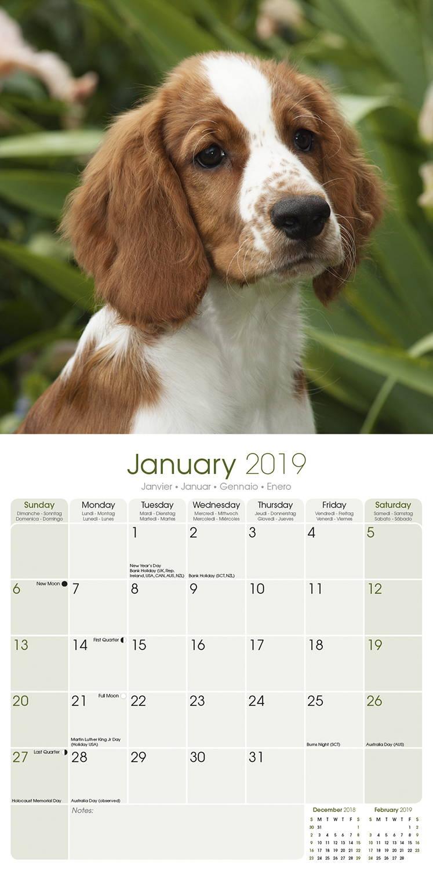 Welsh Springer Spaniel Calendar 2019 | Pet Prints Inc.