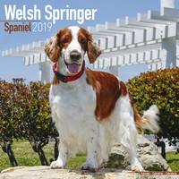Welsh Springer Spaniel Wall Calendar 2019 by Avonside