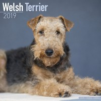 Welsh Terrier Wall Calendar 2019 by Avonside