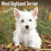 West Highland Terrier Puppies Wall Calendar 2019 by Avonside