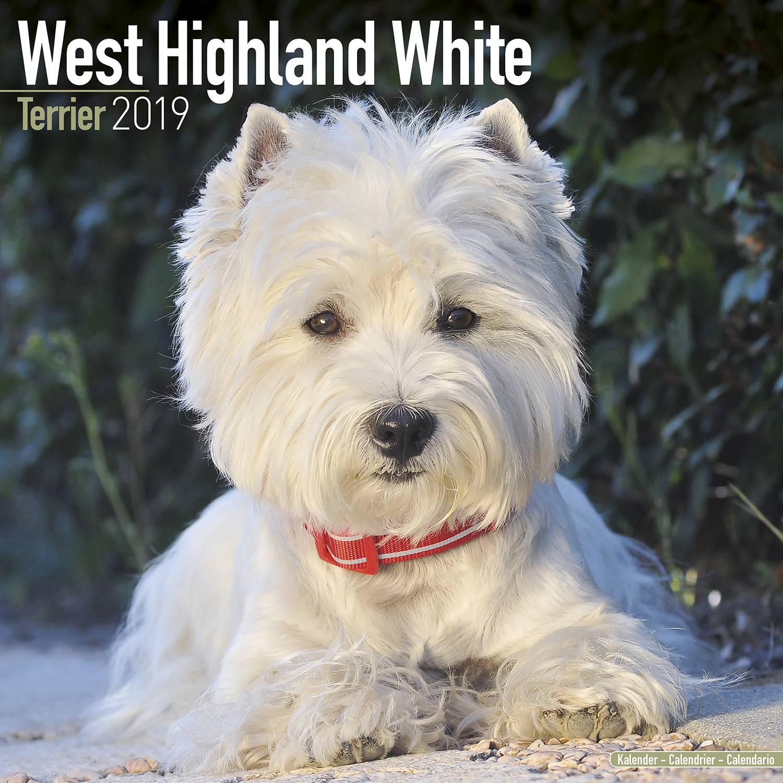 Calendar Dogs : West highland terrier calendar dog breed megacalendars