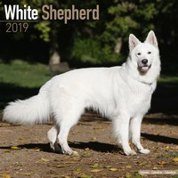 White Shepherd Wall Calendar 2019 by Avonside
