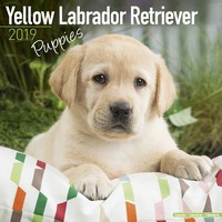 Yellow Labrador Puppies Wall Calendar 2019 by Avonside