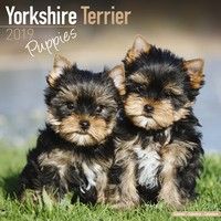 Yorkshire Terrier Puppies Wall Calendar 2019 by Avonside