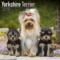 Yorkshire Terrier Wall Calendar 2019 by Avonside