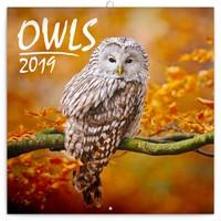 Owls Wall Calendar 2019 by Presco Group