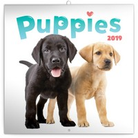 Puppies Wall Calendar 2019 by Presco Group